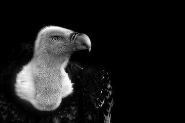 Vale gier, zwart wit fotografie van Rian Verweijmeren