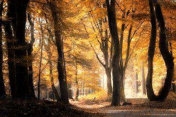 Vom Licht geblendet von Kees van Dongen