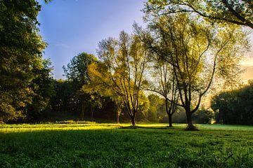 Zonsopgang in het Westerpark van Richard Bremer