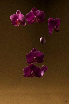 Orchidée flottante sur Lieke van Grinsven van Aarle