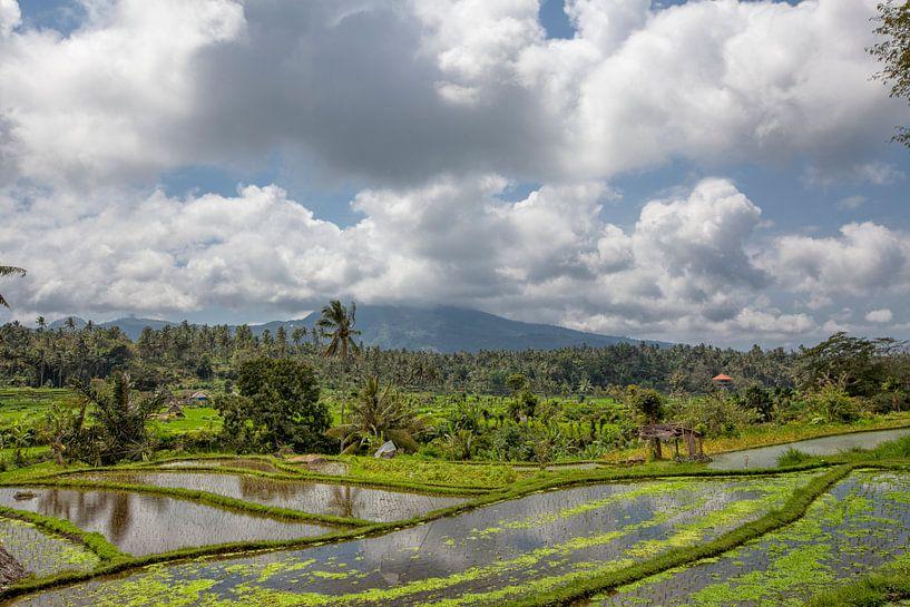 Munduk, Bali. Aan alle kanten omgeven door dichte junglevegetatie zijn felgroene terrassen om rijst  van Tjeerd Kruse