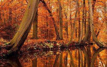 Herbst in Twickel von Arnoud van der Aart
