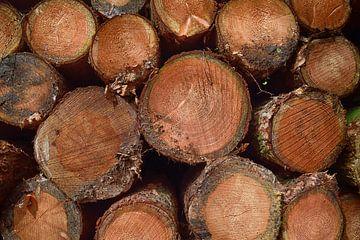 Houtstapel van boomstammen van Jessica Berendsen