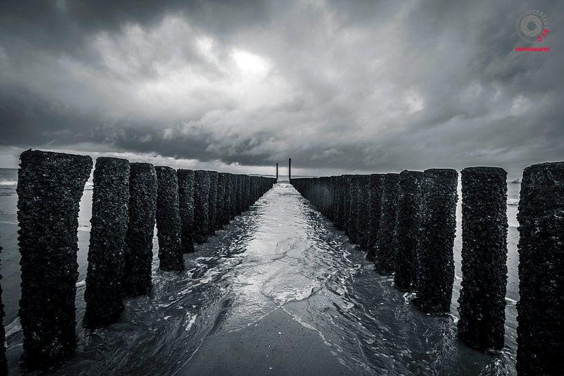 Gulfbeakers van 3,14 Photography