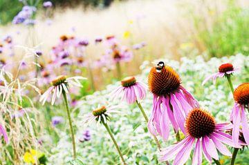 Romantisch dromerig Echinacea veld van