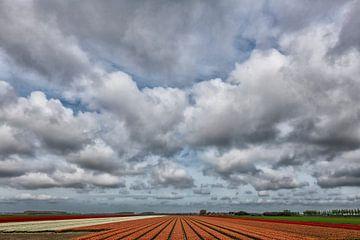 Bollenvelden op Goeree-Overflakkee. van Tilly Meijer