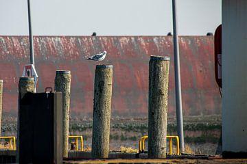 Möwe auf Pfosten im Außenhafen vom Eidersperrwerk von Alexander Wolff