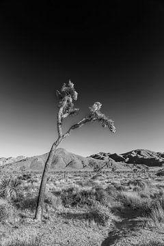 Joshua Tree National Park | Monochrome van