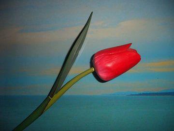 Tulip zee van Peter Norden