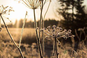 Herfst in Finland van Gert-Jan Kamans