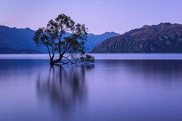 Lake Wanaka op het blauwe uur, Nieuw-Zeeland van Markus Lange