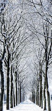 Bomenrij van Kees Rustenhoven