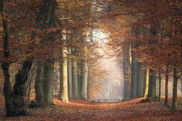 Orange autumn van Roelie Steinmann