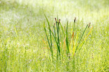 Een lenteochtend. van Rens Kromhout