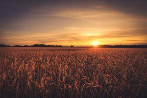 Getreidefeld im Sonnenuntergang