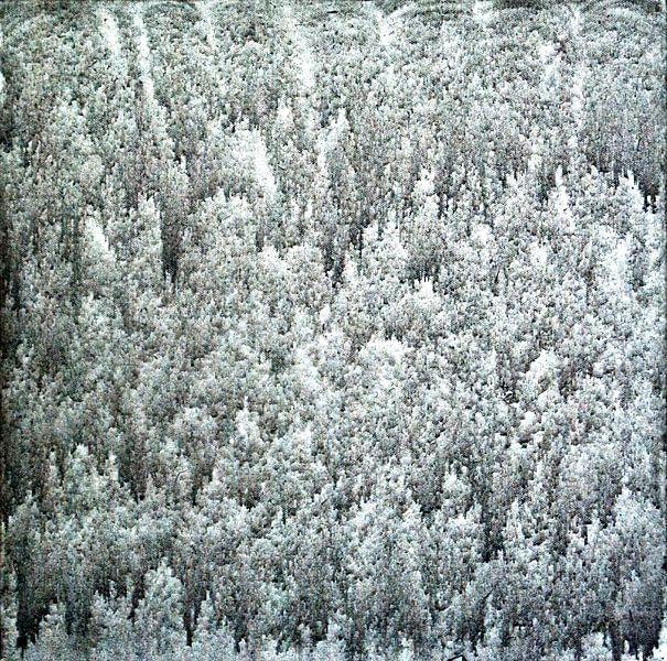 Zelfs de grijze dag is mooi en mysterieus. van Norbert Sülzner