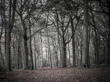 Leeg bos legt in de Herfst de rode loper en wijst de weg van BJ Fleers