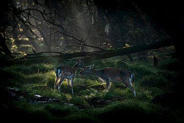 Moeder en dochter damhert in een sprookjesbos. van Albert Beukhof