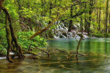 wild aquatisch bos van Daniela Beyer