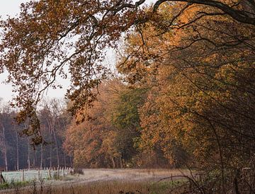 wandelpad onder de herfstbomen van Tania Perneel