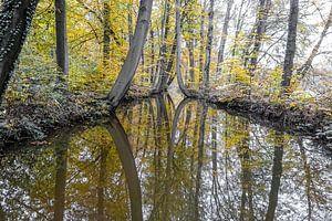 Reflectie Bomen in de Oelerbeek van Raymond Hofste