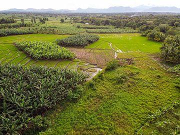 Reisfelder in Sri Lanka VII von Nicole Nagtegaal