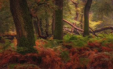 Diep in het bos van Arjen Noord