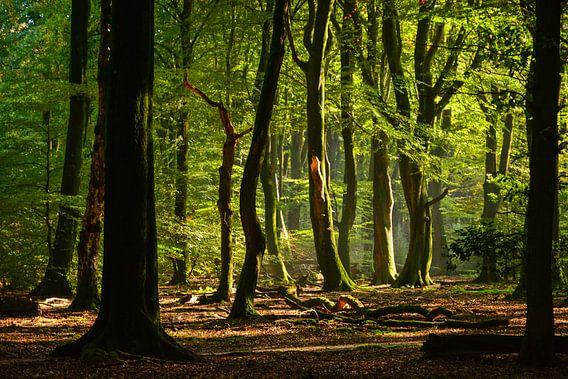 in the woods van Jaco Verheul