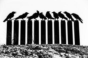 vogelstand van