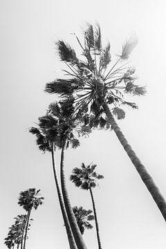 Palmbomen in de zomer van Melanie Viola
