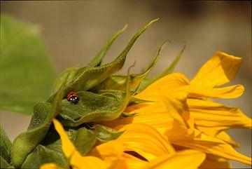 Ladybug van Morgane Baton
