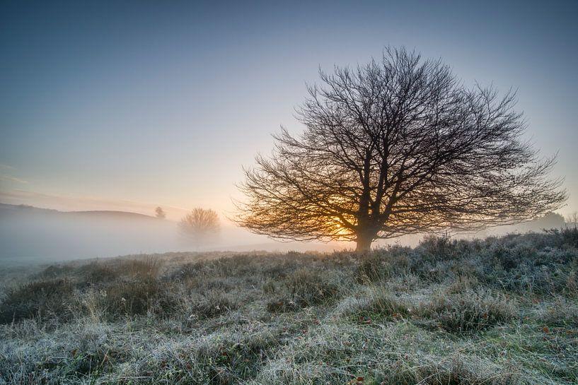 Tree in the mist van Peter Bijsterveld