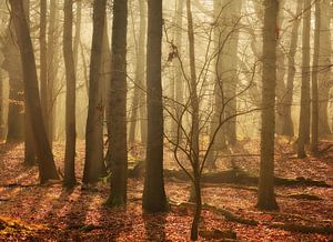 Fairy Woods...