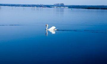 Witte Zwan in het water van Ying Chen