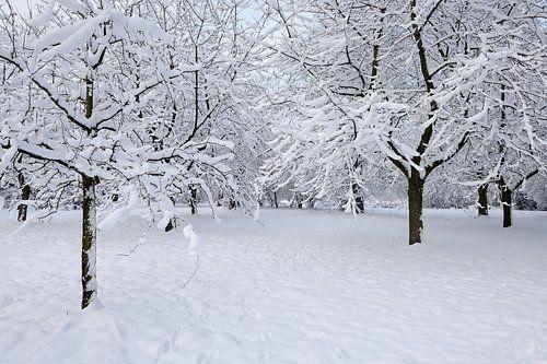 Sneeuwboomgaard von Merijn van der Vliet