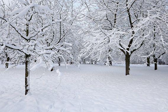 Sneeuwboomgaard van Merijn van der Vliet