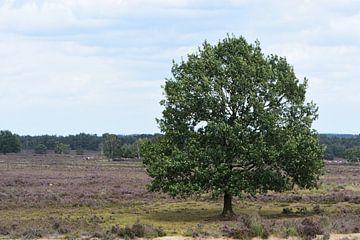 Ein Baum auf der Heide von Gerard de Zwaan