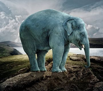 Blue Elephant van