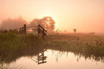 Zonsopkomst op een mistige ochtend van