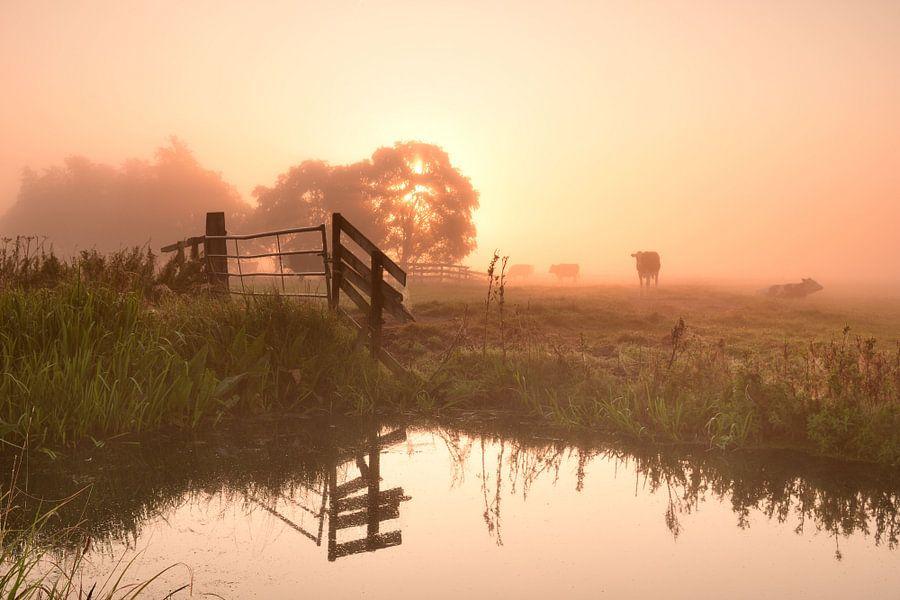 Zonsopkomst op een mistige ochtend