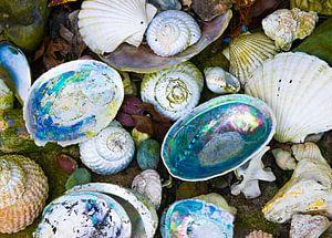 Schelpen kleurenpracht van Maike Scheepstra