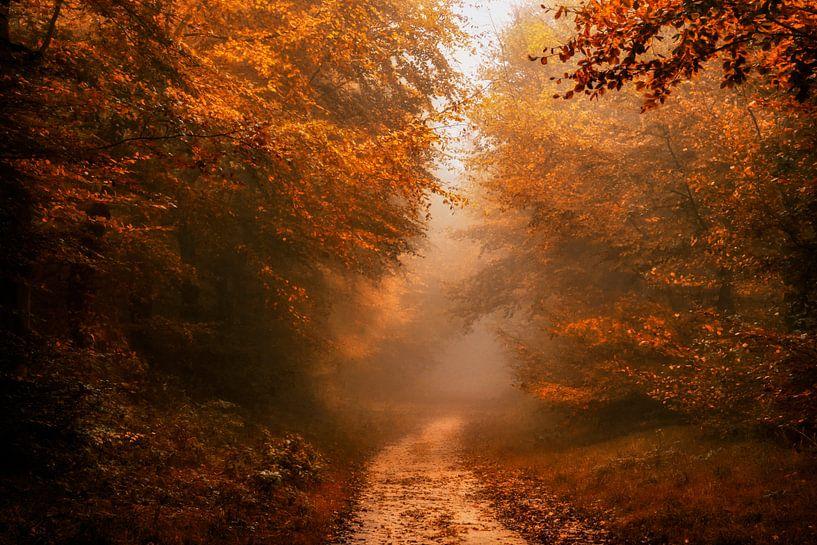 Herfst Wandeling van Lars van de Goor