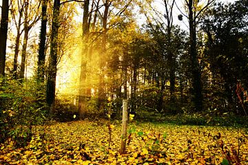 Zon breekt door in de herfst von Maarten Honinx
