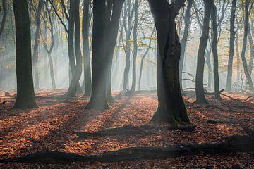 boswandeling van Michael van Dam