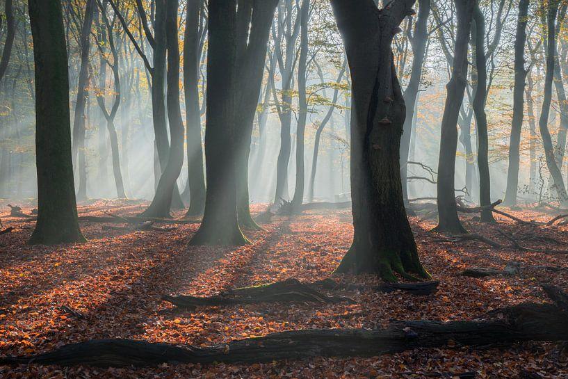 Waldspaziergang von Michael van Dam