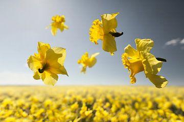Blumenkraft - Niederländischer Meister