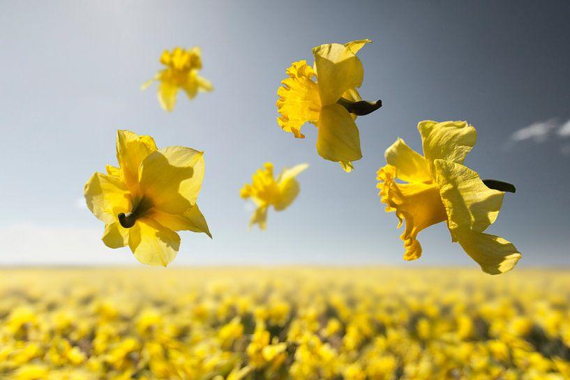 Flower Power - Dutch Master van Claire Droppert