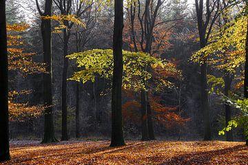Herfst bos van Ad Jekel