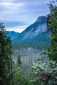 Mountains forest van Arkadiusz Kurnicki