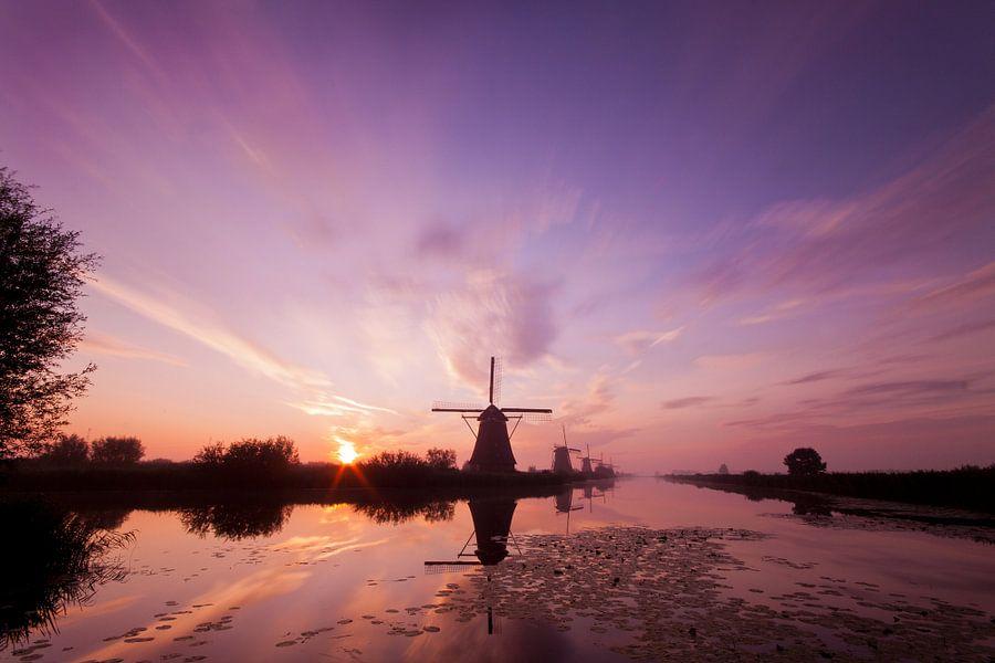 Purple Haze in Kinderdijk van Peter Halma